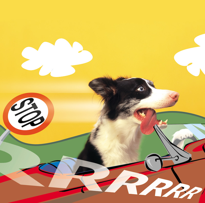 What's the best dog car?   Will it be a Rover?