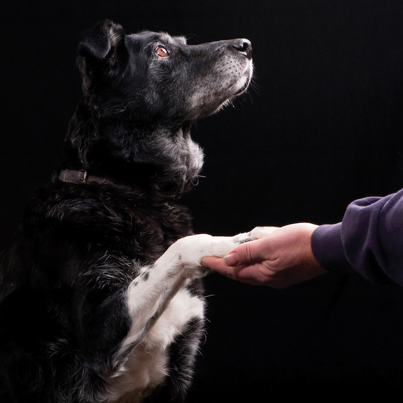 Senior moments -   Do dogs get dementia?