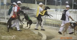 CANIDROME GREYHOUNDS STRUGGLE WITH LEADOUTS