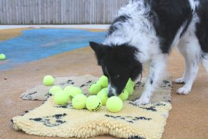 Photo 3 - New balls please!