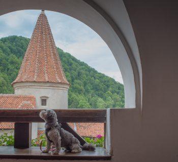 RDRT Bran (Dracula's Castle) Romania8