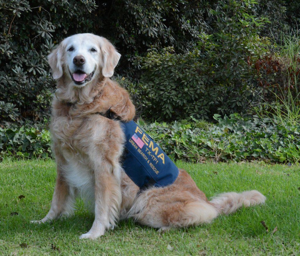 foto Famous Rescue Dogs
