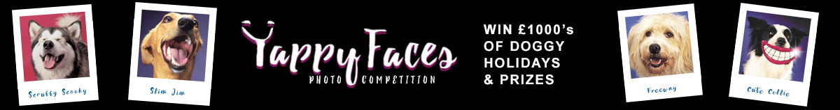 dt-banner-yappyfaces