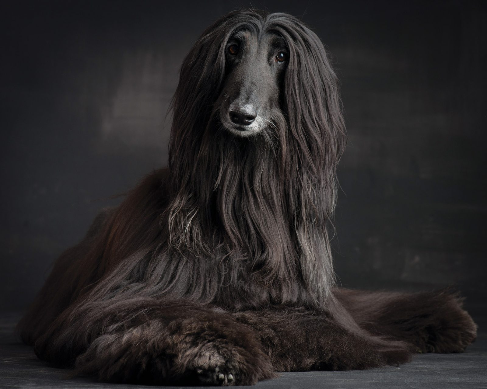 Afghan invasion…Our crush on the hounds of love