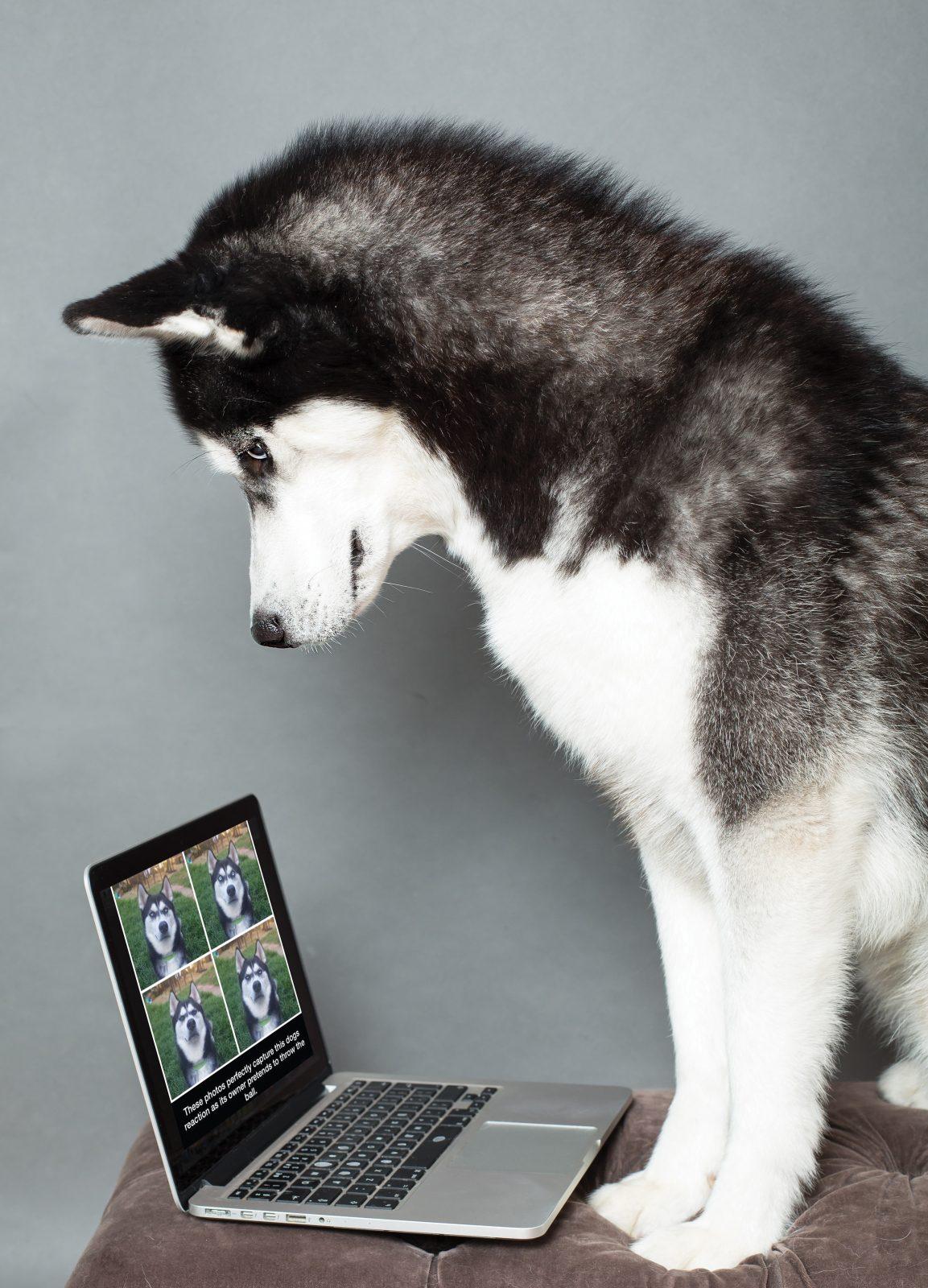 Internet famous! Canine social stars