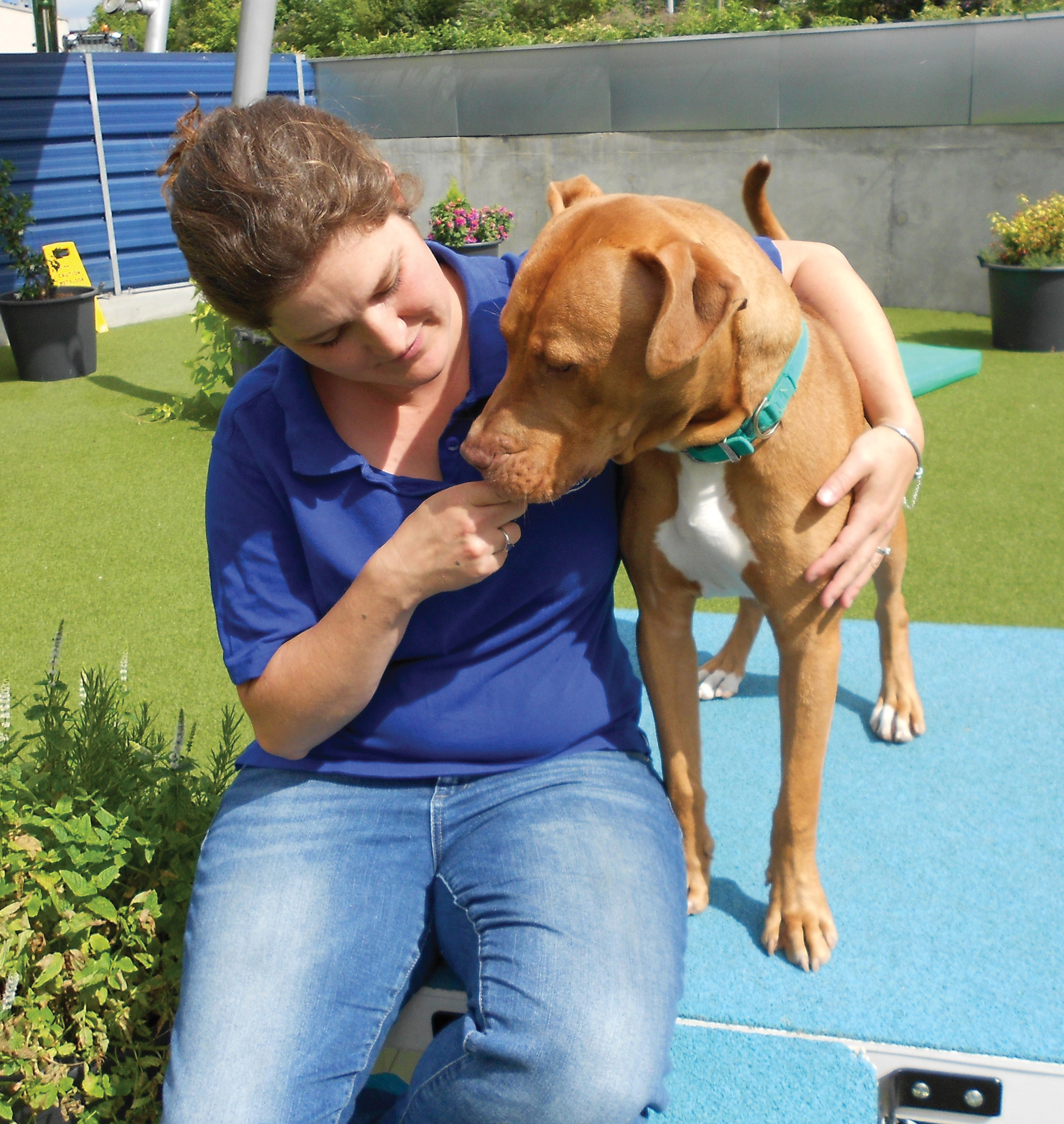 BSL's latest victims