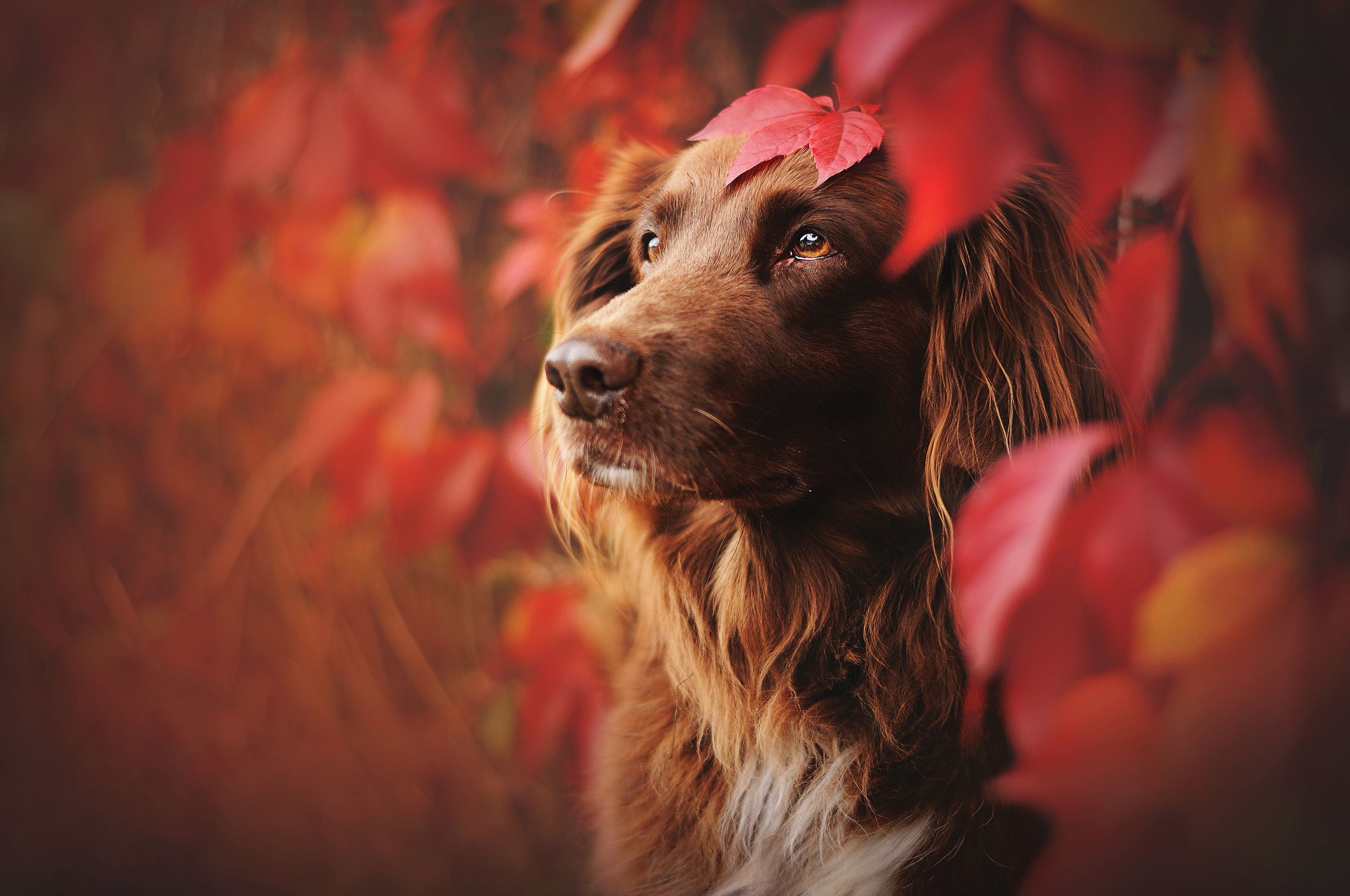 The greatest dog photographers in the world