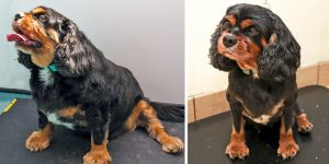 oscar-before-and-after-composite