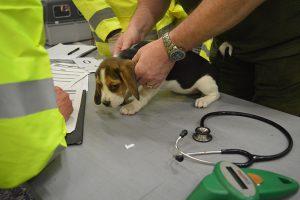 vet-check-puppy