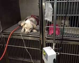 via Facebook/China's Rescues and Shelters