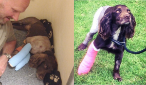 Darcy at different stages of her incredible recovery.