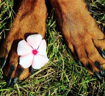 paws-1611629_960_720