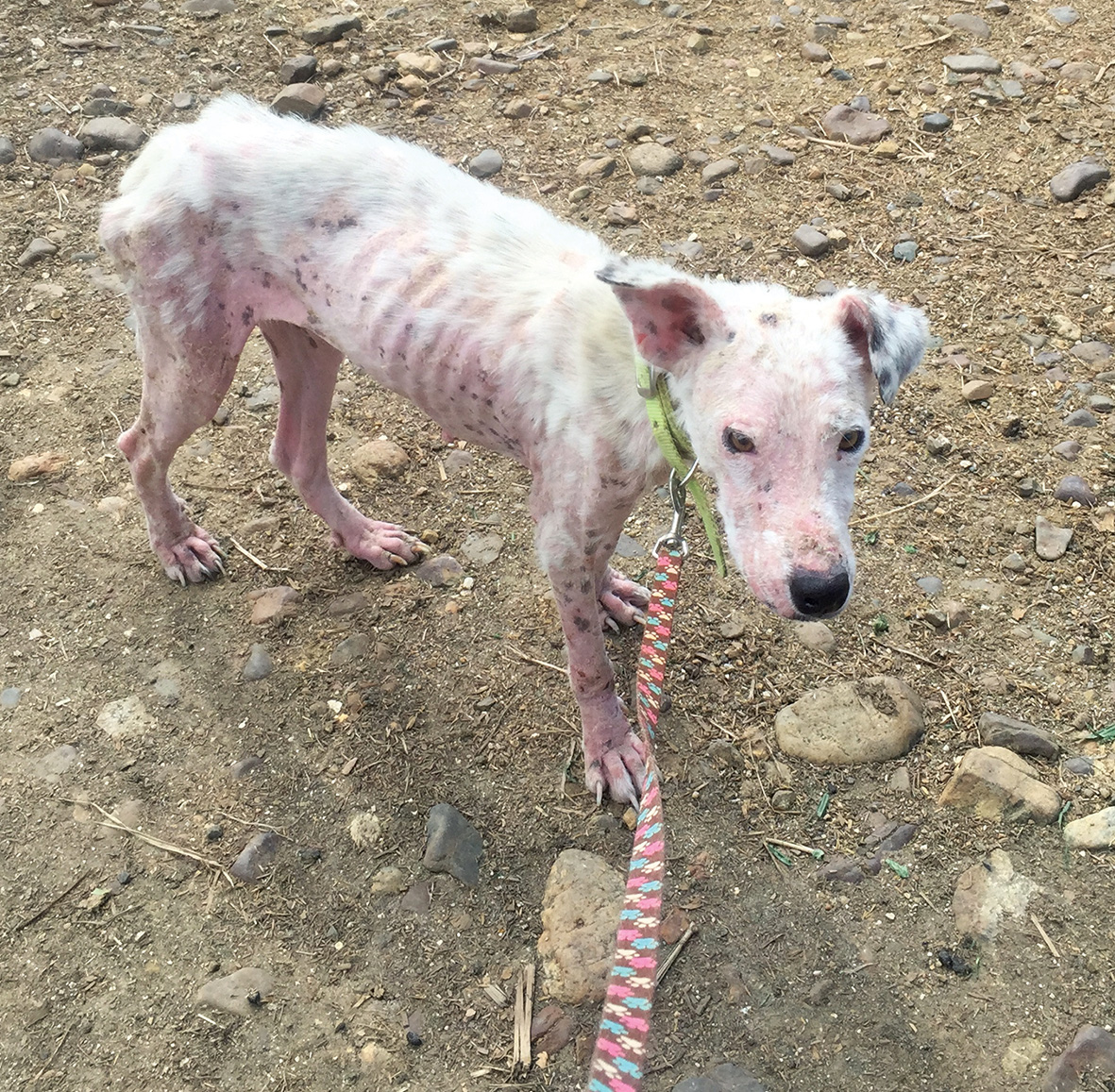 Rescue me : The pink dog