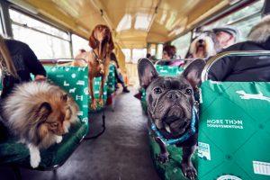 Dog Bus_12