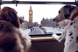 Dog Bus_2