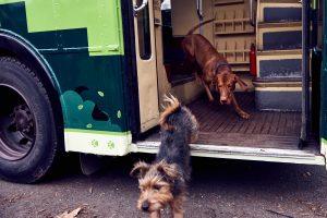 Dog Bus_8