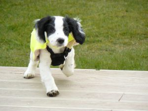 Molly as a puppy. Via PDSA