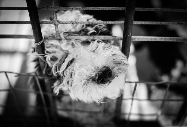 Puppy Farm 3