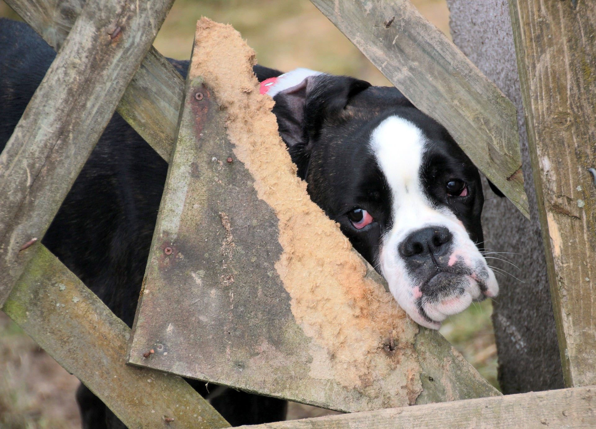 guest essays archives dogs today magazine the puppy farm next door