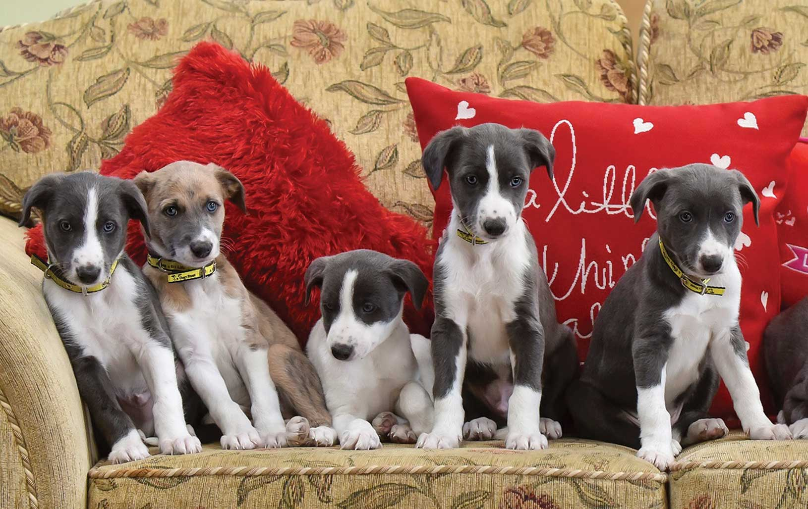 Blossoming in spring for unwanted Xmas puppies