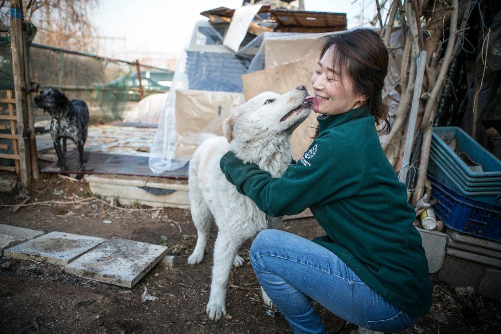 South Korea Dog Meat Farm