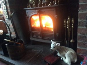 lamb by the fire