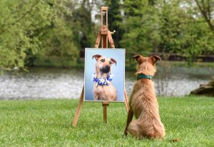 Dog looks at portrait