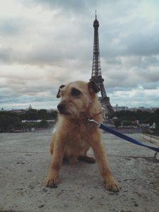 Bruce in Paris