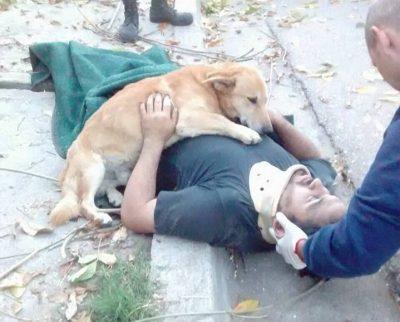 loyal dog hugging owner