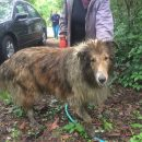 sinkhole lassie was rescued
