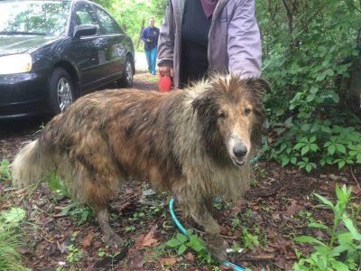 sinkhole lassie was rescued