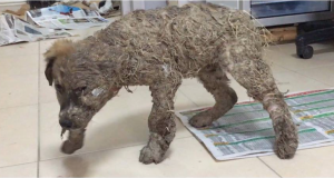 pascal covered in glue and dirt