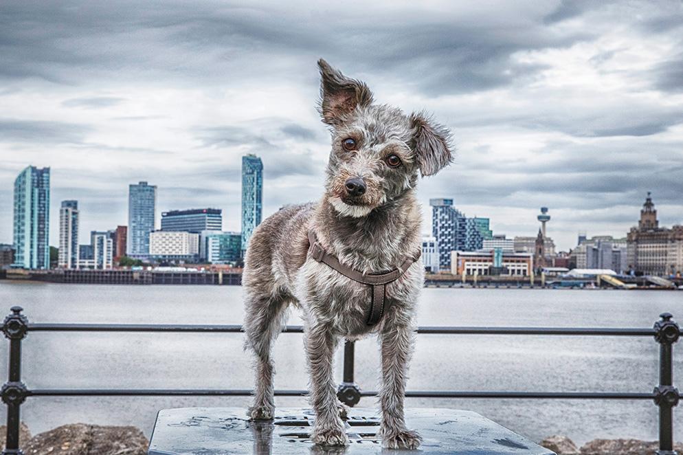 best-dog-photos