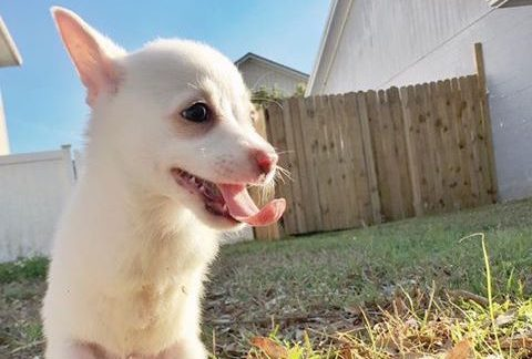 puppy hops