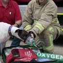 Greyhound demonstrates pet oxygen mask
