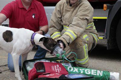 Greyhound demonstrates pet oxygen mask