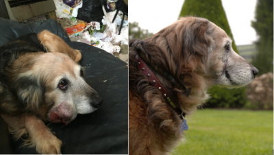 Transformation of Timmy the dog with the tumour