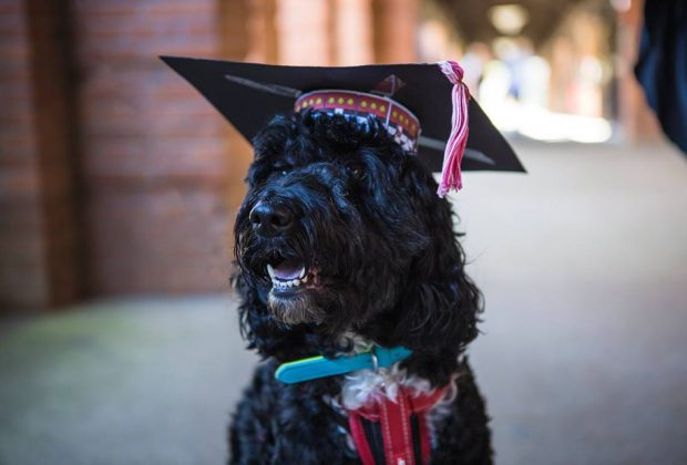 Boris wears his own mortarboard as guest of graduation ceremony