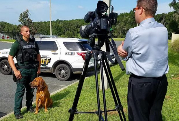 Ally the Bloodhound and her handler are interviewed