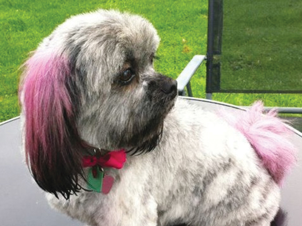 Dog with dye in its ears and tail
