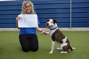 Indie the Staffie poses with her picture