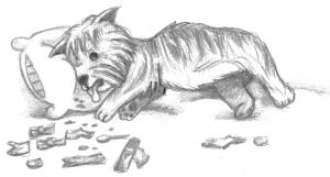 Westie drawing by Wendy Brighton