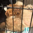 Puppies abandoned in the field in Wendover placed in a crate