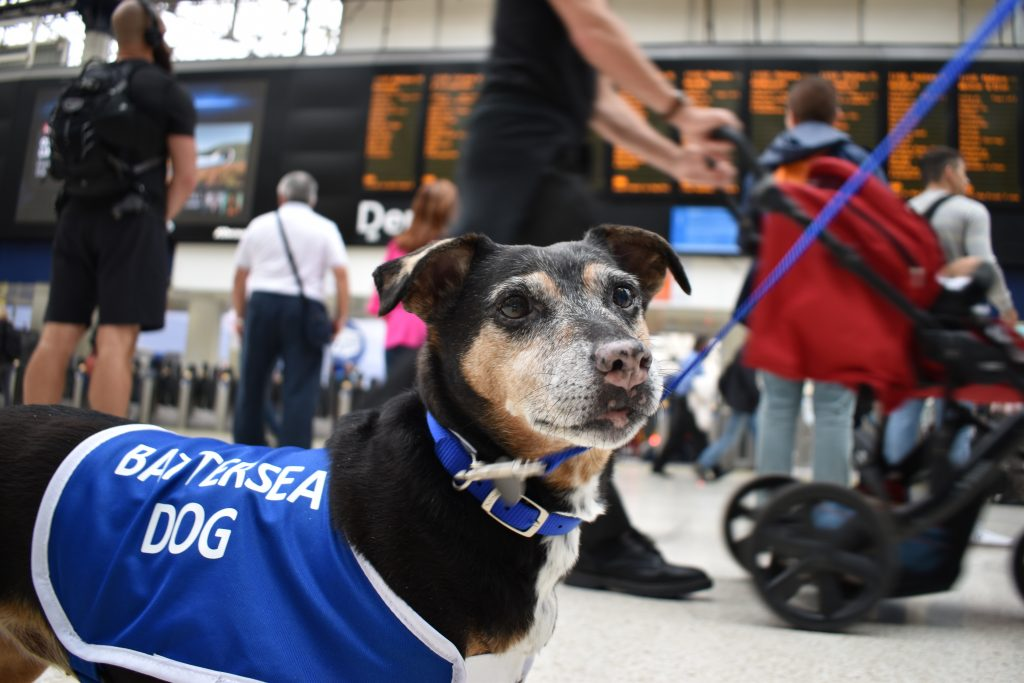 Terrier Millie at Waterloo Station