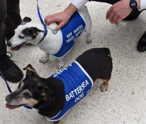 Rescue terriers Millie and Mollie greet people at London Waterloo
