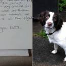 Missie the Springer Spaniel and the note left for her and Spaniel Aid