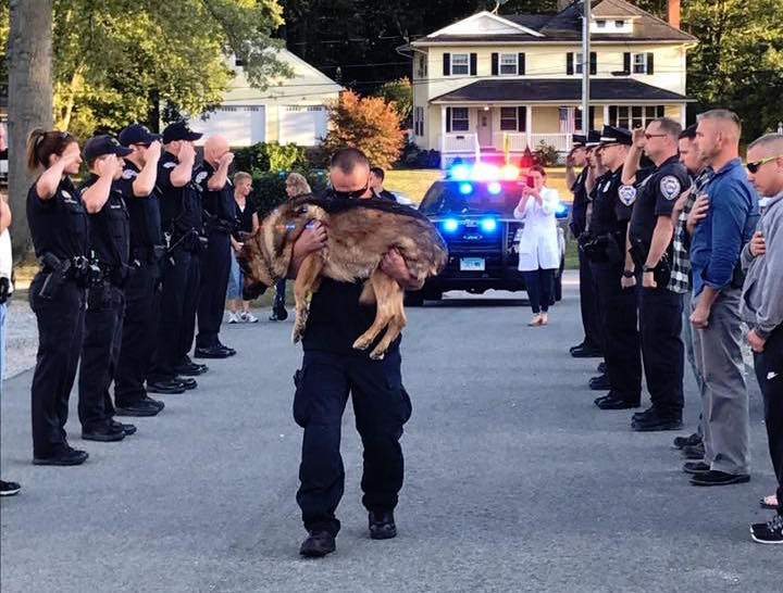Hunter is carried in to be put down following cancer diagnosis with a guard of honour support