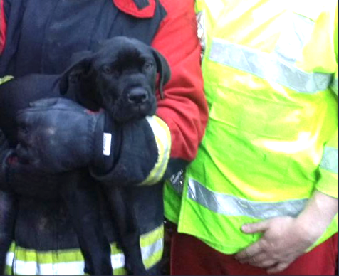 Puppy Buddy after he was resuscitated by firefighters