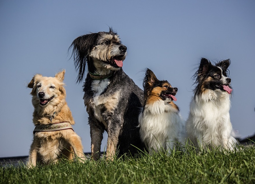 Four dogs sit on some grass
