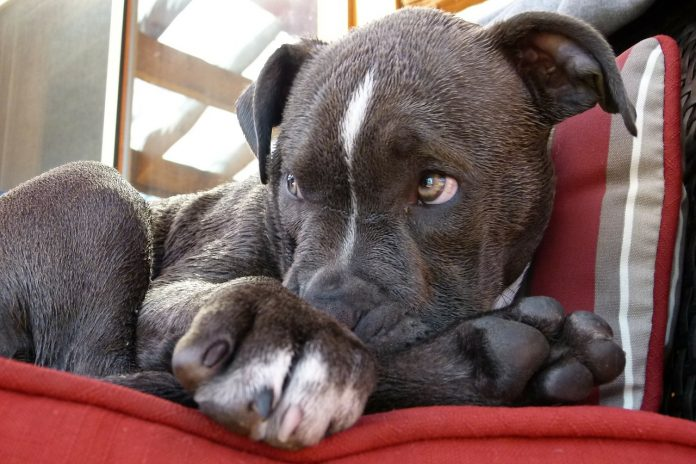breed specific legislation kills dogs based on their looks
